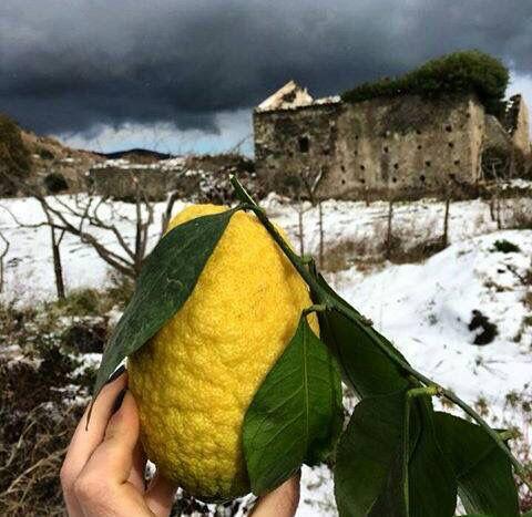 Tra il giallo del limone e il bianco della neve... Sicilia!  #Etna #Tarderia #Pedara #SiciliaTerra   Foto di Mrs. Redgram