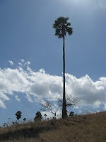 Taman Nasional Komodo, Indonesia, 2009