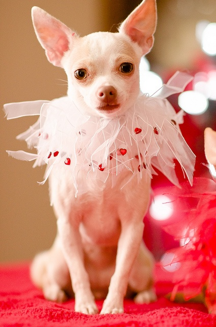 valentine's cupid dog