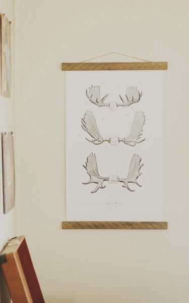 Moose Antler Study Vol. 1 - Bring a touch of the outdoors through your own door with this beautifully illustrated moose antler poster.