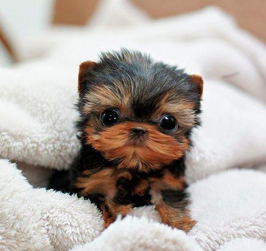 Super cute Puppy! 100% vegan & cruelty free www.purposefoods.com.au