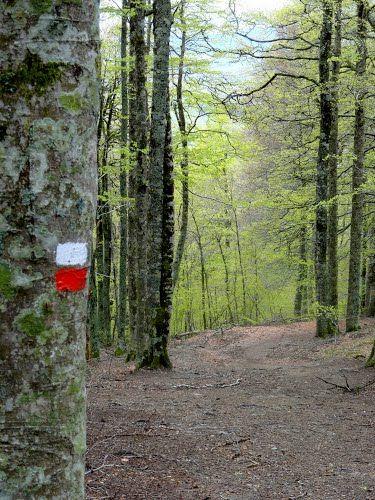 La forêt vers Roncesvalles (Navarra) Espagne