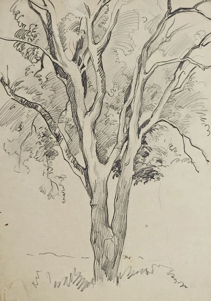Tree Pencil Study Drawing By George Baer