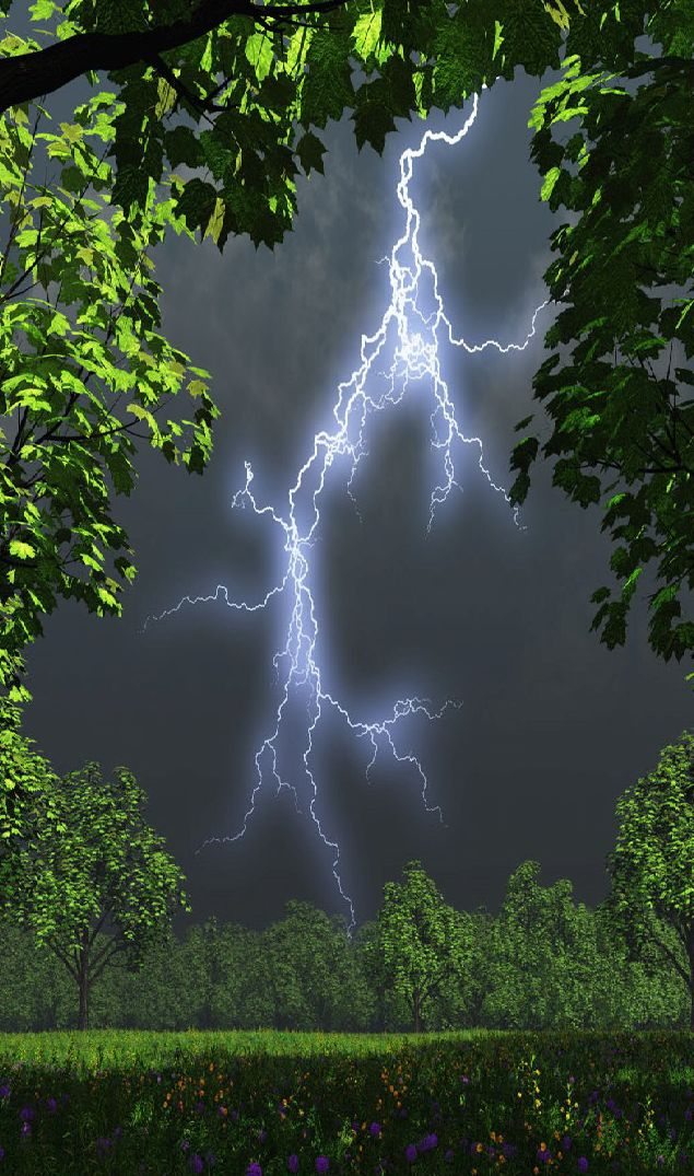Forest lightning...Brought to you by House of Insurance in #EugeneOregon call for a  free price  comparison 541-345-4191.