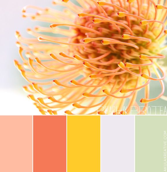 """a """"peachy""""-protea-inspired color palette"""