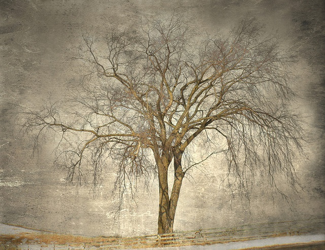 Winter Cottonwood by Jamie Heiden