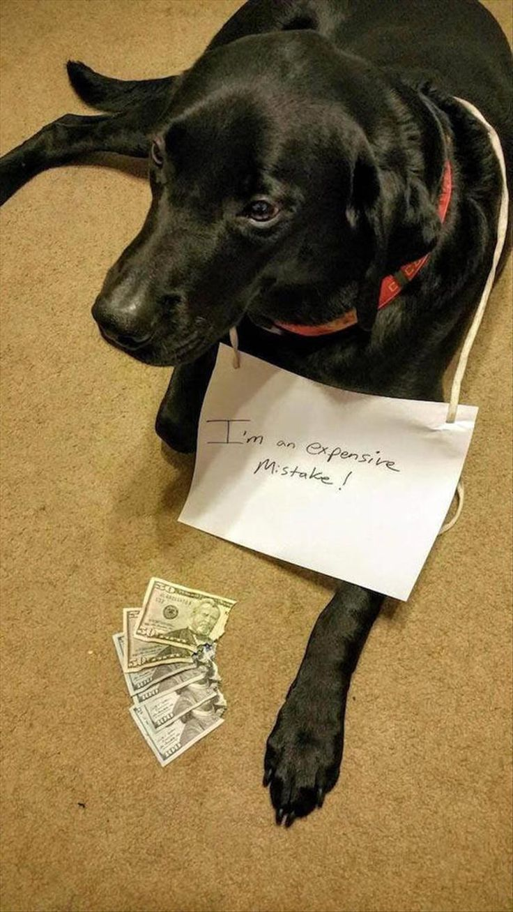 Funny Dog Shaming Picture Dump 22 Pics