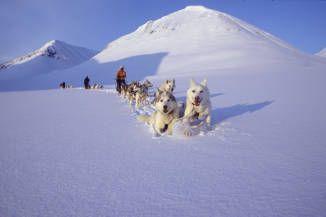 Erlebnis Hundeschlitten | Aktiv-Ferien in Lappland mit Kontiki Reisen