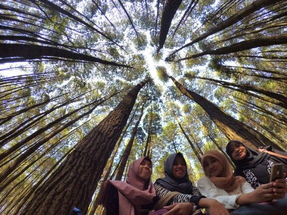 Girl's day at pinus forest