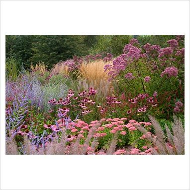 GAP Photos - Garden & Plant Picture Library - New perennial border with…
