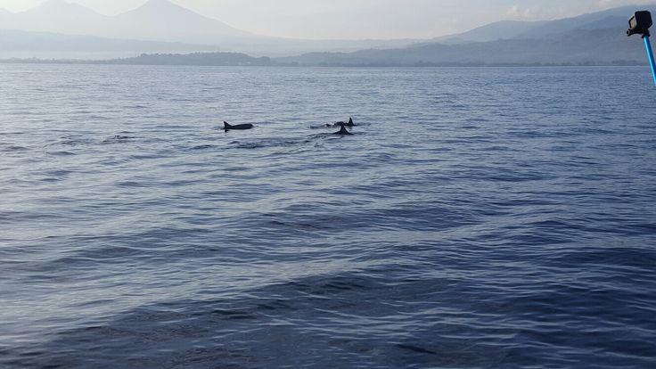 Dolfijnen in Bali