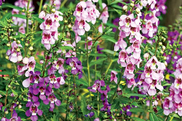 10 Flowers That Thrive in Full Sun