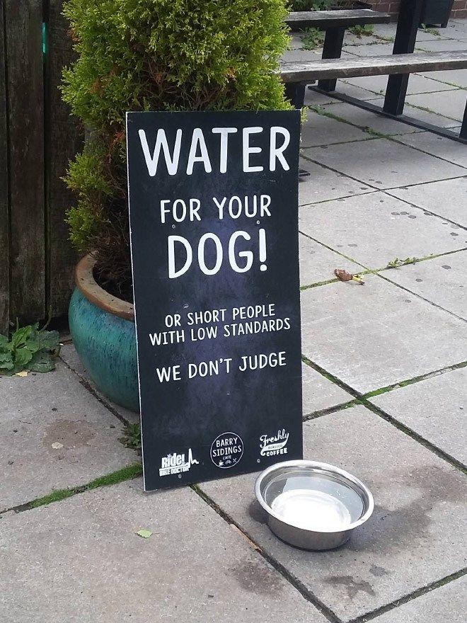 Ofrece agua para los perros de una forma divertida, aunque igual algo molesta para algunas personas 😂