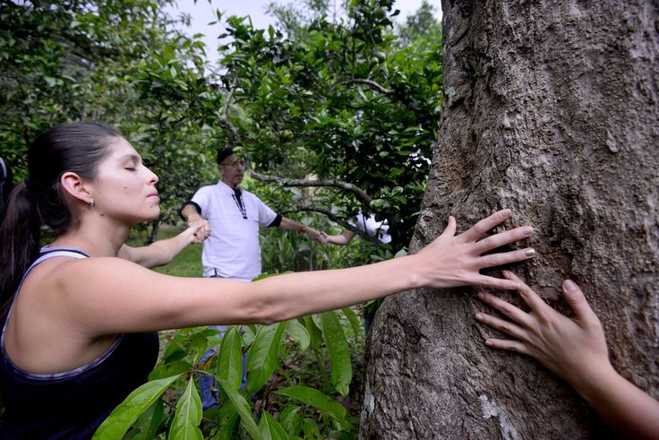Earthing and Forest Bathing in Costa Rica