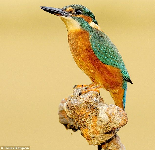 Best NATURe Images On Pinterest Alligators Amphibians And - Man finally captures the perfect kingfisher photo after 6 years and 720000 attempts