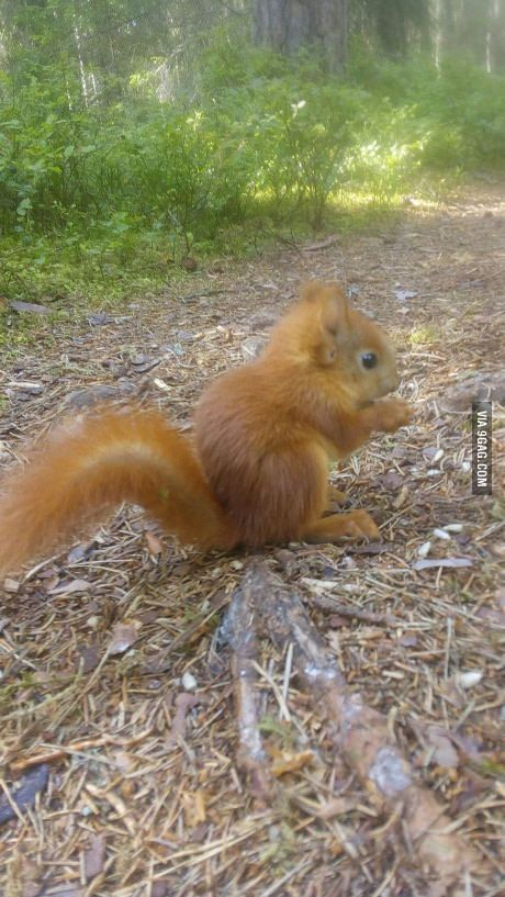 Look what little cute squirrel I found in the forest.