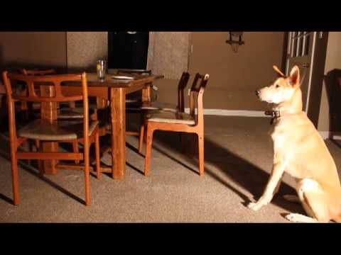 Teach Deaf Dog To Leave It - a fantastic intro to an essential command. From Awesomedogvideo.