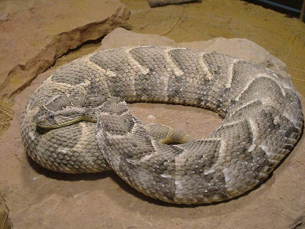 essay on hunting snake 'hunting snake' is a simple poem about a simple moment however, there is a powerful message behind it as well a very striking aspect is that something as trivial as a snake can be the focus of someone's life at a particular moment.