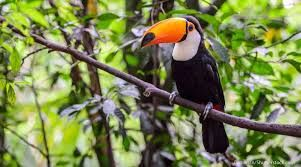 rainforest - Google Search