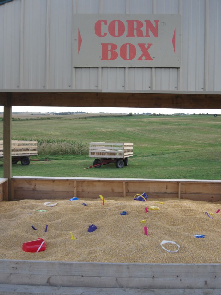 a sandbox, filled with corn = corn box   At Pinter's in NE Iowa