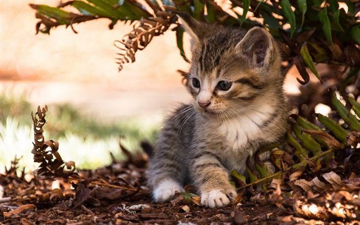 Download wallpapers small cute kitten, small cat, a fluffy kitten, pets