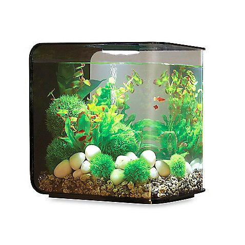 biOrb Flow 30-Liter Aquarium in Black: Combining form and function, the biOrb Flow Aquarium gives you everything you need to create a stylish environment for your fish. This all-in-one design is easy to set up and easy to maintain, giving you a hassle-free fishkeeping experience.