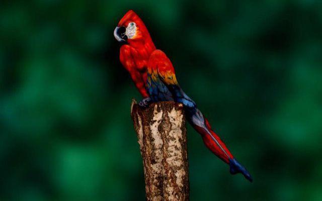 Pintura corporal de papagaio