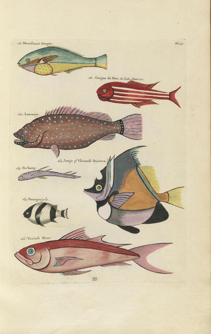 Felix murillo lleno de colores painting acrylic artwork fish art - Poissons Ecrevisses Et Crabes De Diverses Couleurs Et Figures Extraordinaires Biodiversity Heritage Fish Artvintage
