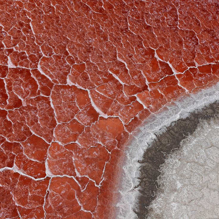 Searles Lake, California. Masses of red, salt-loving algae live in the swamps on the banks of Lake Searles, a salt lake in the Mojave desert.
