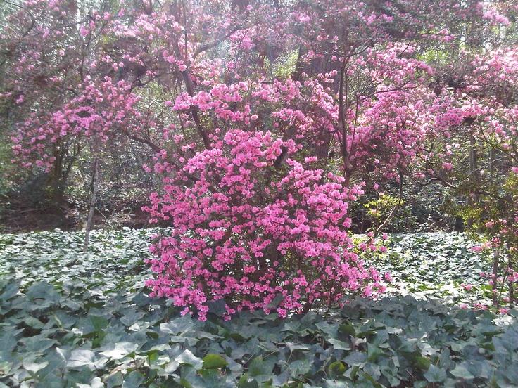 Floralia46