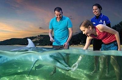 Hand feed wild dolphins on Moreton Island -Queensland, Australia