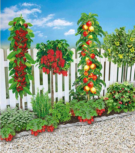 Mein schöner Garten Naschbeet pflanzfertig, 18 Pflanzen günstig online kaufen …   – Garten