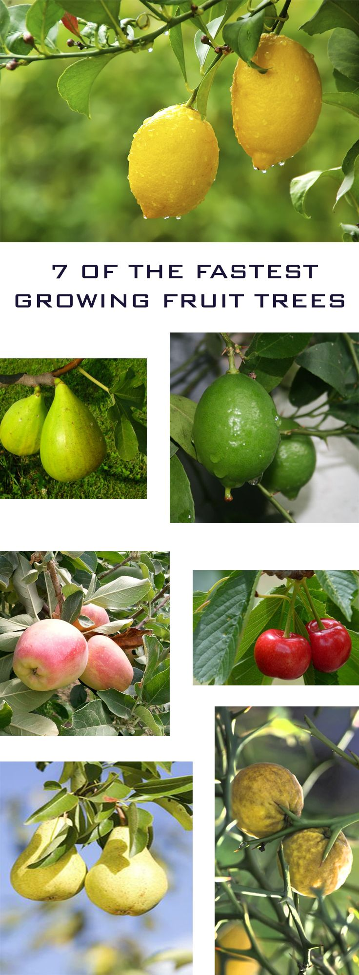 Plants, Indoor, Outdoor, Flowering...|7 Of The Fastest Growing Fruit Trees|-- I want to add some fruit trees to our back yard as soon as we can. This is a very handy article explaining which trees to plant.