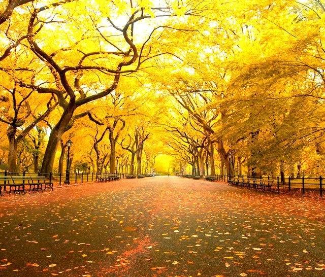 Central Park New York: Autumn In Central Park, New York City