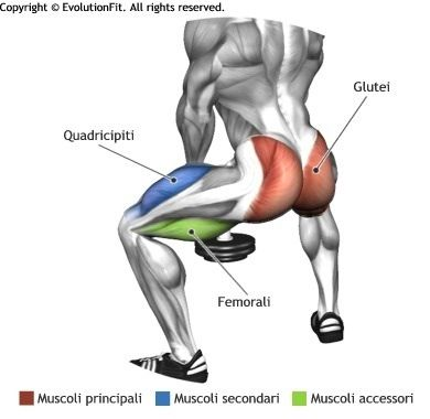 Squats muscles used
