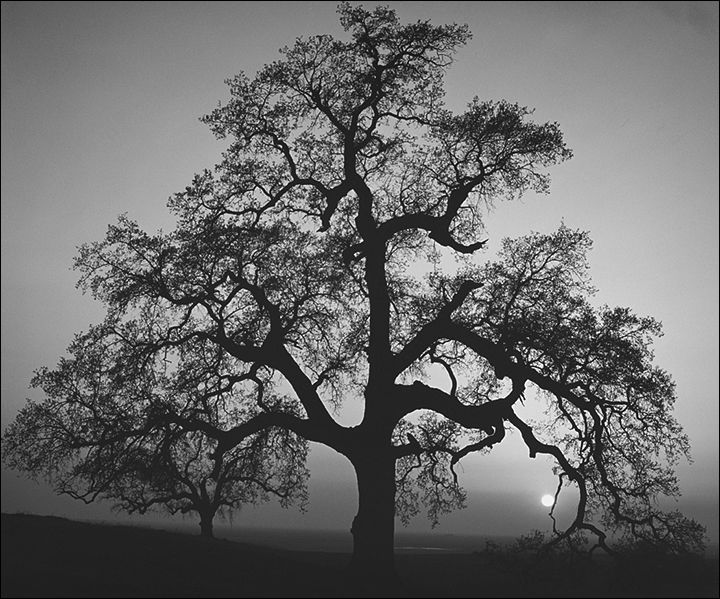 Foto: Ansel Adams
