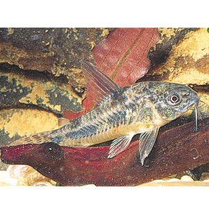 47 best images about fish aquarium on pinterest live for Petsmart live fish