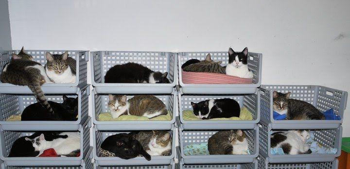 Dicas para gateiros: Condomínio para gatos
