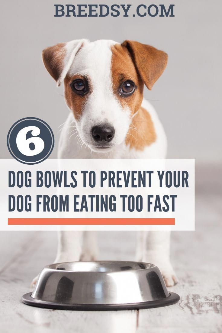 6 Best Slow Feed Maze Dog Bowls For Fast Eaters Updated 2020