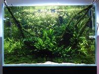 Veiledning om hold av tropisk ferskvannsakvarium | Akvaforum.no - Akvarieforum, akvarium og akvariefisk