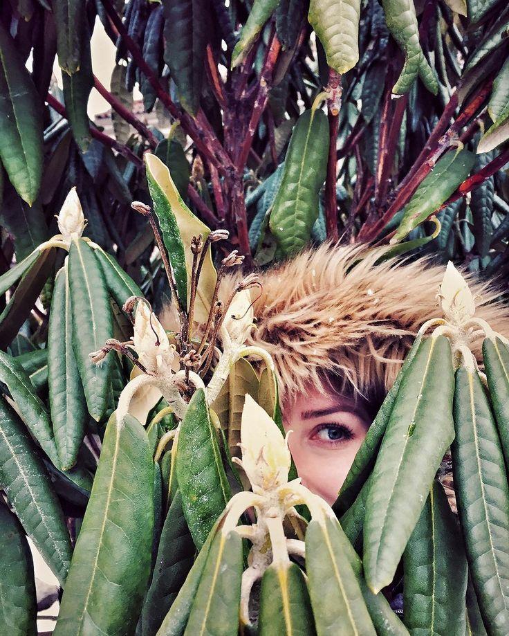 Kaprinski Crockett hiding in the bushes during #instameethelsinki_1_17 #igershelsinki #hidden
