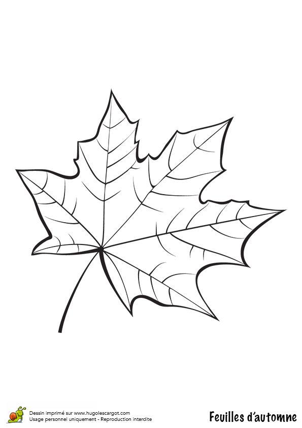 Coloriage / dessin feuilles automne platane