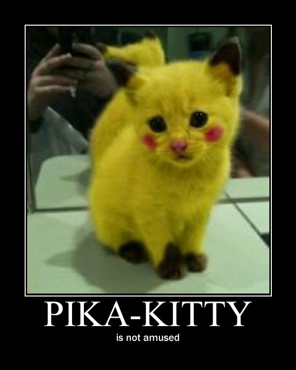 pikachu cats 45454 movieweb