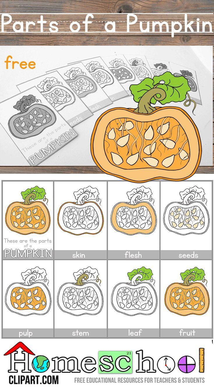 Parts Of A Pumpkin Montessori Cards Parts Of A Pumpkin Kindergarten Science Pumpkins Kindergarten