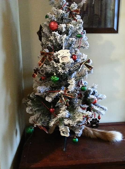 Operation Christmas Tree Takedown Soldiers are in position Cats