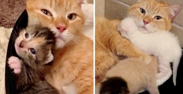 Stray Cat So Happy When Her Kittens Are Saved Just In Time She Won T Leave Their Side Happy Kitten Stray Cat Kittens