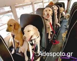 Ελεύθερη η μεταφορά ζώων με ΚΤΕΛ . Υποχρεωτικά εντός του χώρου επιβατών.