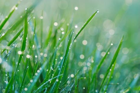 7 Nontoxic Fixes for Common Lawn Problems | Rodale News