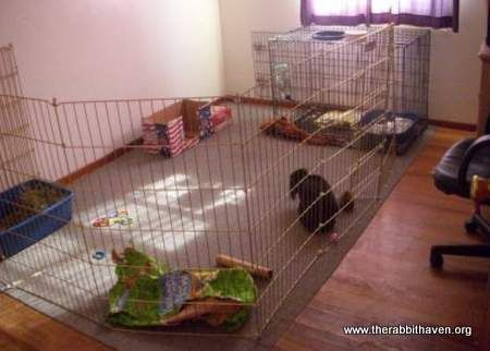 Bunny Pens And Flooring Suggestions Tile Board Rabbit