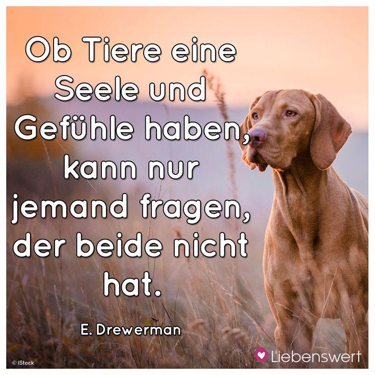 Ob Tiere eine Seele und Gefühle haben, kann nur jemand fragen, der beide nicht. (E. Drewerman)